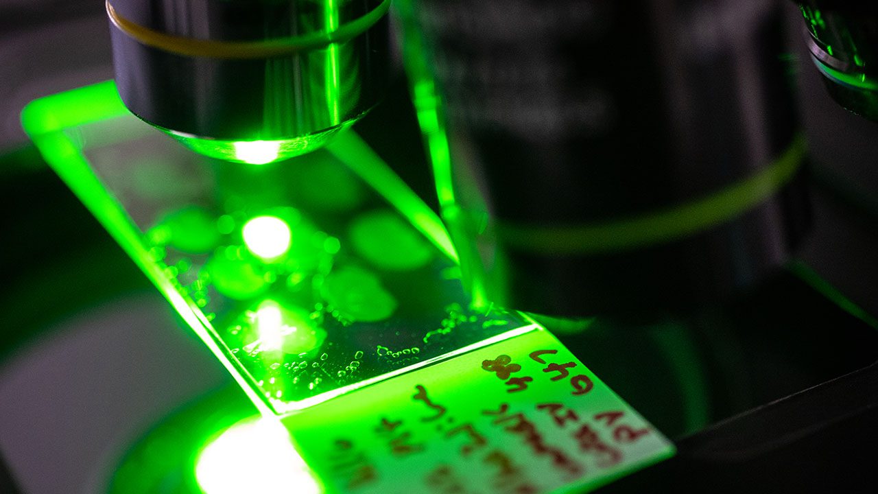 green light from a microscope shines on a slide