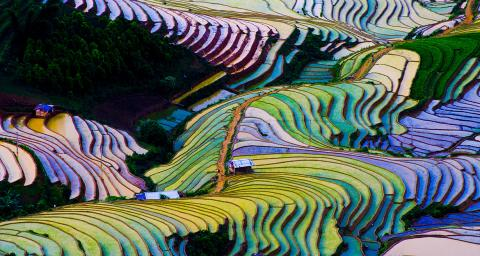 An aerial view of a terraced rice fields in Vietnam, full of water. Light reflects purple and gold off the water.