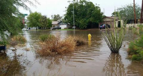A flooded front yard in the Phoenix metro area