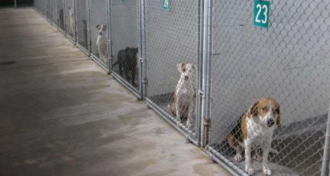 Dogs behind gates in a shelter